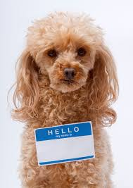 Pet Most Popular Pet Names Of 2017 Revealed Merck Veterinary Manual