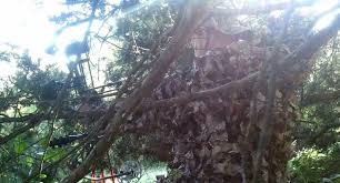 Ghost Hunting Blinds How To Make An Awesome Hunting Blind In A Cedar Tree