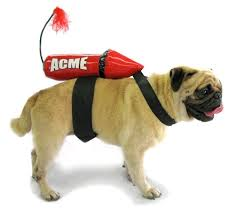 acme rocket small costumes rocket costume for small dogs