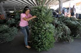 christmas trees go fast at stores stands