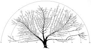 digibarn re visiting and revising the bushy tree diagram of