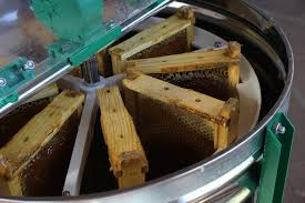 Harvesting Honey From Top Bar Hive Langstroth Hive The Lazy Homesteader