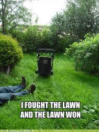 Lawn Mower Meme - funny picture dump of the day 53 pics funny pictures
