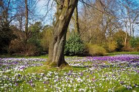 free images landscape tree forest blossom sky leaf purple