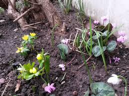 gardening anne de gruchy