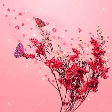 beautiful blossom tree with pink flowers petals fall and