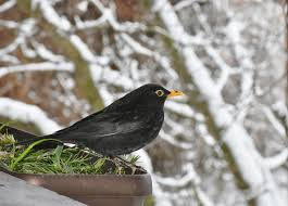 february is for the birds national bird feeding month clermont