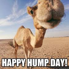 Hump Day Camel Meme - most funny hump day meme