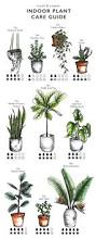 best 25 grow room ideas on pinterest indoor house plants