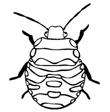 stink bug beetle coloring pages place color