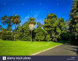 palm trees in public space royal botanic gardens melbourne stock