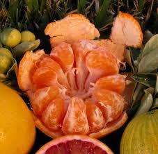 Urban Garden Houston In The Garden With Urban Harvest Tangerine Mandarin Satsuma Are