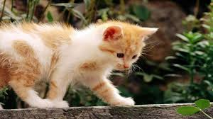 cute beautiful kitten walking nature hd quality desktop background