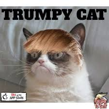 Grumpy Cat Meme No - grumpy cat clipart gumpy pencil and in color grumpy cat clipart