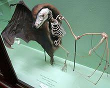 As Blind As A Bat Meaning Bat Wikipedia