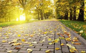photography nature pavements leaves trees park sun