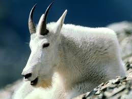 46 best rocky mtn wildlife images on pinterest animals wild