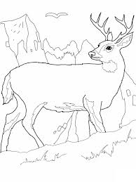 coloring page deer images