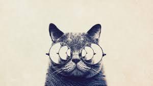 Morpheus Cat Meme - i ve been living a lie imgur