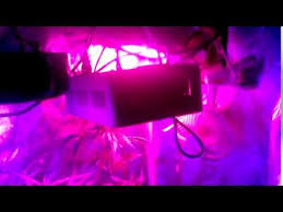 apollo power and light the best led grow lights apollo horticulture purple sun 384w