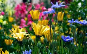 05 21 15 4000x2657 pretty flowers desktop wallpapers free