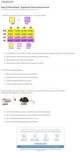 quiz u0026 worksheet epistasis gene interactions study com