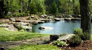 Kansas wild swimming images Natural swimming pool pond photo gallery design fabrication jpg