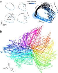 mapping brain activity at scale with cluster computing nature