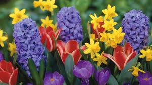 image of spring flowers spring flowers 14127 1680x945 px hdwallsource com