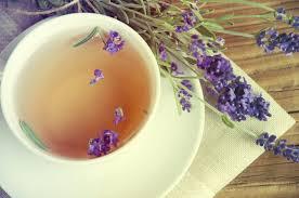 lavender tea lavender tea pregnancy livestrong