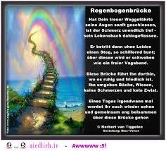 trauersprüche katze regenbogenbrücke über die regenbogenbrücke traurige gedichte