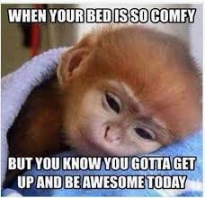 Best Daily Memes - 290 best good morning meme images on pinterest good morning