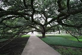 the 12 finest trees in a photo tour of the state s pretty