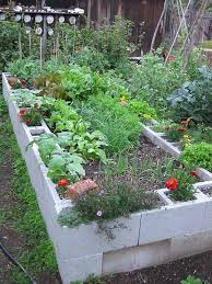 cinder block garden archives garden tips and tricks