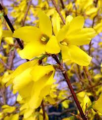 Spring Flower Pictures 103 Best My Utah Flower Garden Images On Pinterest Flower