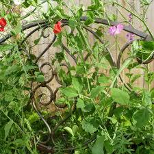 creative garden trellis ideas mehmetcetinsozler com