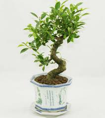small house plants design ideas desk indoor plants for office
