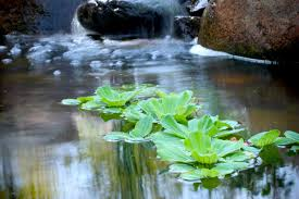 small plants for small ponds aquascape inc