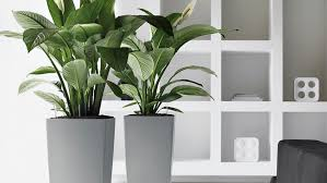 indoor plant www viendoraglass com server10 cdn 2016 08 03 indo