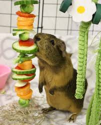 what fruit and vegetables you should include in your guinea pig u0027s