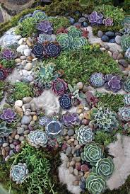 Pebbles And Rocks Garden Succulent Rock Garden Garden Pinterest Cake Table Gardens