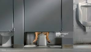 Bathroom Stall Pics Dog Using Public Bathroom Stall With Urinal Stock Photo Getty Images