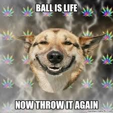 Ball Is Life Meme - image jpg