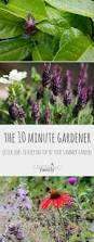 Summer Gardening - 7 the 10 minute gardener quick summer gardening jobs growing