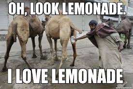 Camel Memes - wednesday hump i mean dump album on imgur