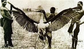 Seeking You Just Lost Wings Shukernature Seeking The Missing Thunderbird Photograph One Of
