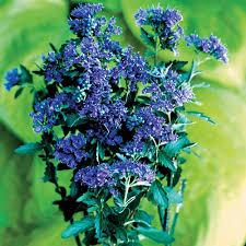 135 best a fragrant garden images on pinterest beautiful flowers