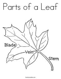 parts of a leaf coloring page learn it pinterest coloring