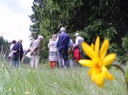Klinik Franken Bad Steben Projekt Arnica Montana Hof Arnikatag Im Naturhof Faßmannsreuther