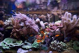 reef tank photo galleries marine aquarium pictures